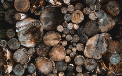 5 Reasons To Recycle Wood